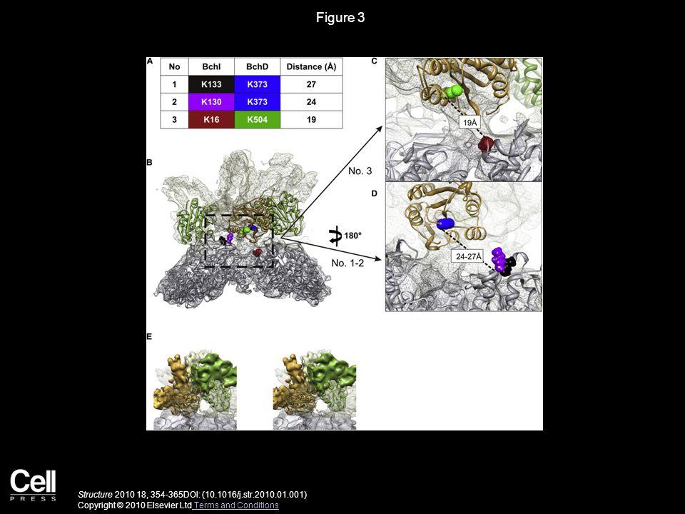 Figure 3 Structure 2010 18, 354-365DOI: (10.1016/j.str.2010.01.001) Copyright © 2010 Elsevier Ltd Terms and Conditions Terms and Conditions