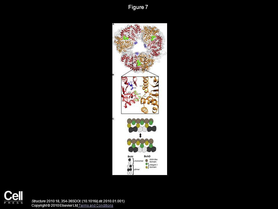 Figure 7 Structure 2010 18, 354-365DOI: (10.1016/j.str.2010.01.001) Copyright © 2010 Elsevier Ltd Terms and Conditions Terms and Conditions