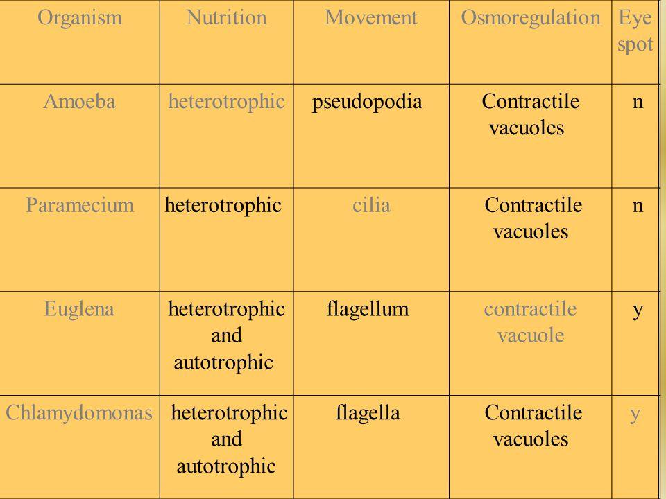 OrganismNutritionMovementOsmoregulationEye spot Amoebaheterotrophic Paramecium cilia Euglena contractile vacuole Chlamydomonas y Complete table in Chi