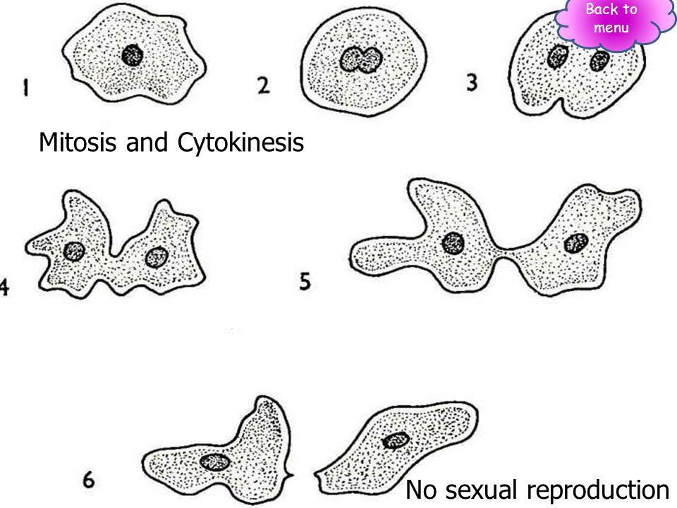Mitosis and Cytokinesis No sexual reproduction Back to menu