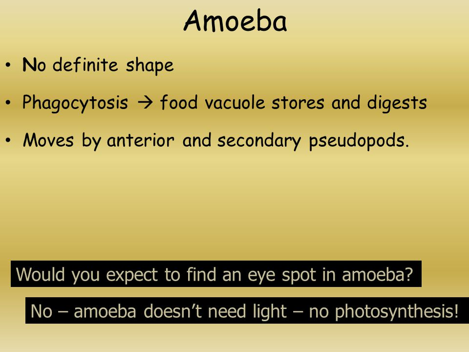 Amoeba No definite shape Phagocytosis  food vacuole stores and digests Moves by anterior and secondary pseudopods.