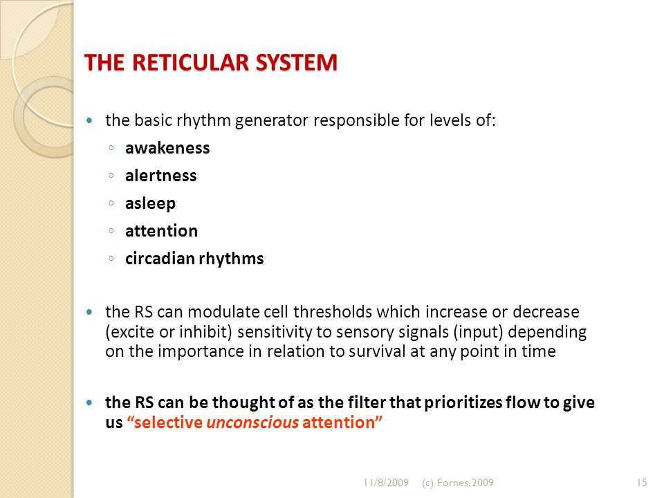 THE RETICULAR SYSTEM the basic rhythm generator responsible for levels of: ◦ awakeness ◦ alertness ◦ asleep ◦ attention ◦ circadian rhythms the RS can