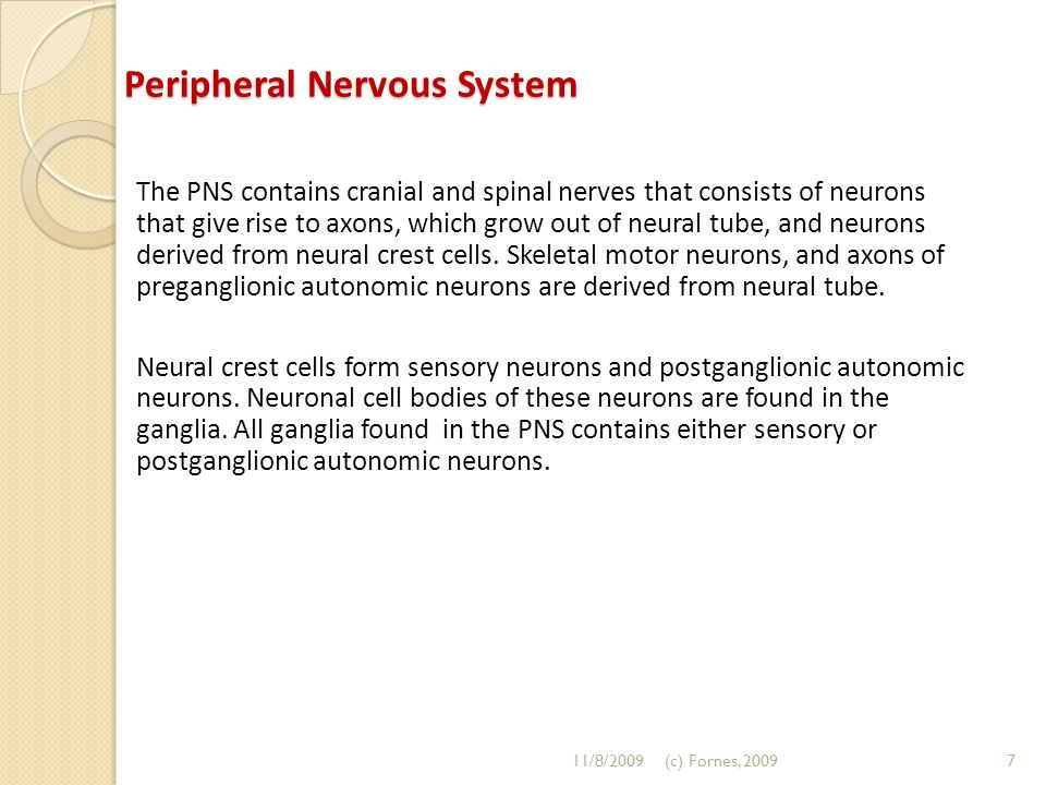 Peripheral Nervous System The PNS contains cranial and spinal nerves that consists of neurons that give rise to axons, which grow out of neural tube,