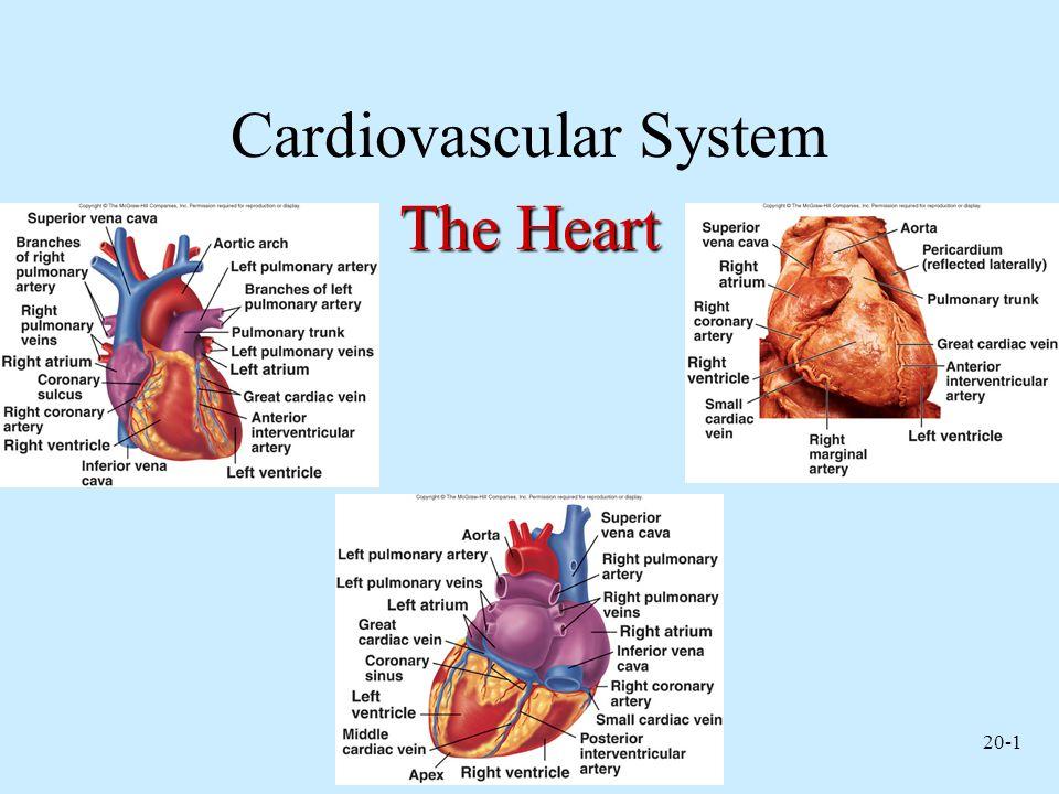 20-12 Heart Valves