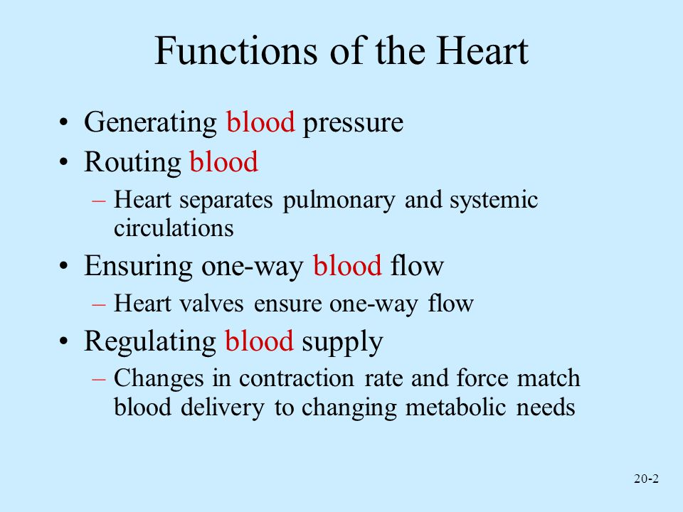 20-33 Regulation of the Heart Intrinsic regulation: Results from normal functional characteristics, not on neural or hormonal regulation –Starling's law of the heart Extrinsic regulation: Involves neural and hormonal control –Parasympathetic stimulation Supplied by vagus nerve, decreases heart rate, acetylcholine secreted –Sympathetic stimulation Supplied by cardiac nerves, increases heart rate and force of contraction, epinephrine and norepinephrine released