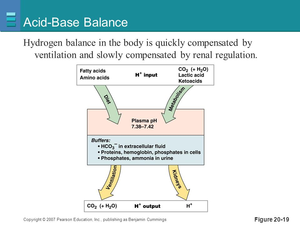 Copyright © 2007 Pearson Education, Inc., publishing as Benjamin Cummings Figure 20-19 Acid-Base Balance Hydrogen balance in the body is quickly compe