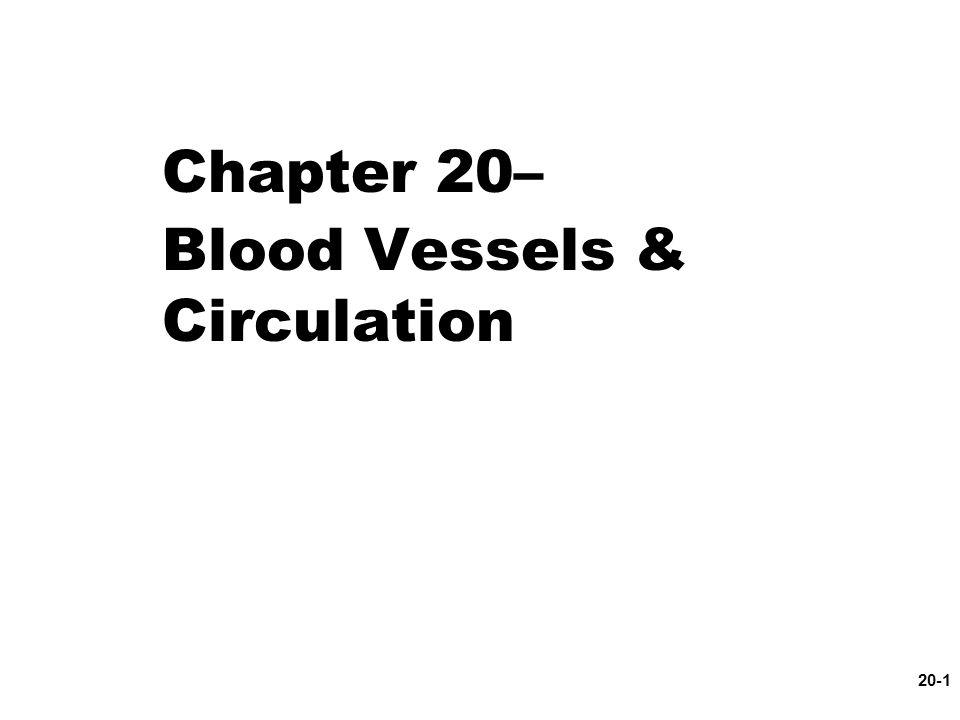 20-1 Chapter 20– Blood Vessels & Circulation