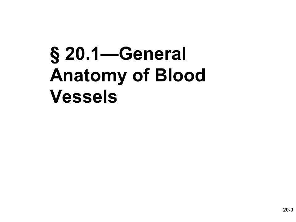 20-3 § 20.1—General Anatomy of Blood Vessels