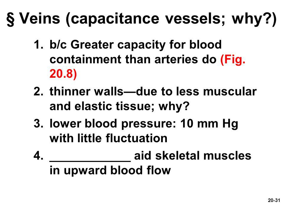 20-31 § Veins (capacitance vessels; why?) 1.b/c Greater capacity for blood containment than arteries do (Fig. 20.8) 2.thinner walls—due to less muscul