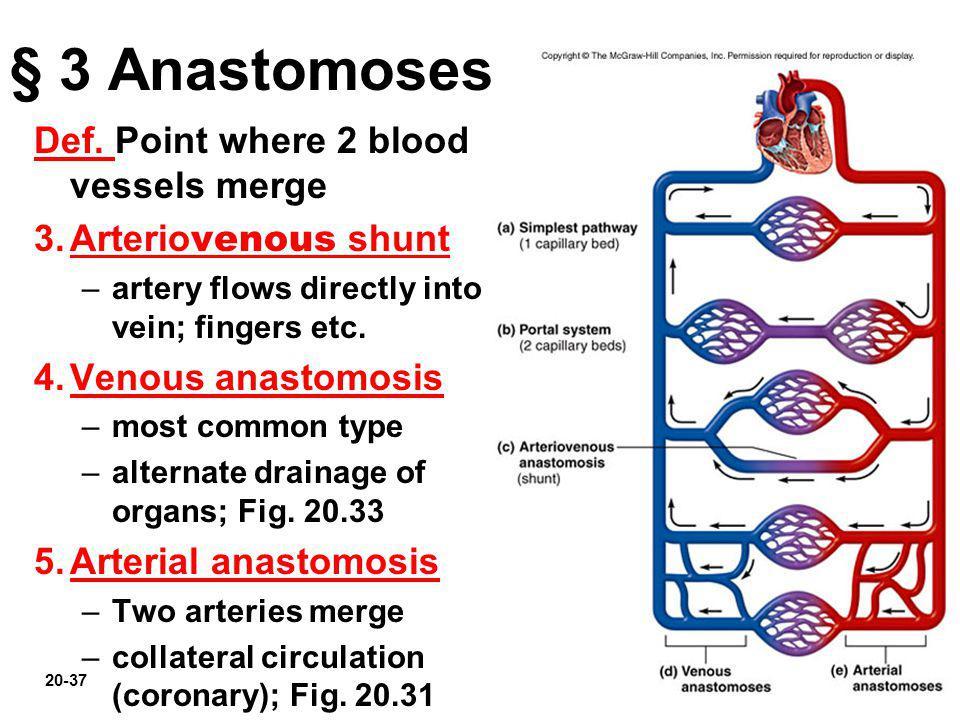 20-37 § 3 Anastomoses Def. Point where 2 blood vessels merge 3.Arterio venous shunt –artery flows directly into vein; fingers etc. 4.Venous anastomosi