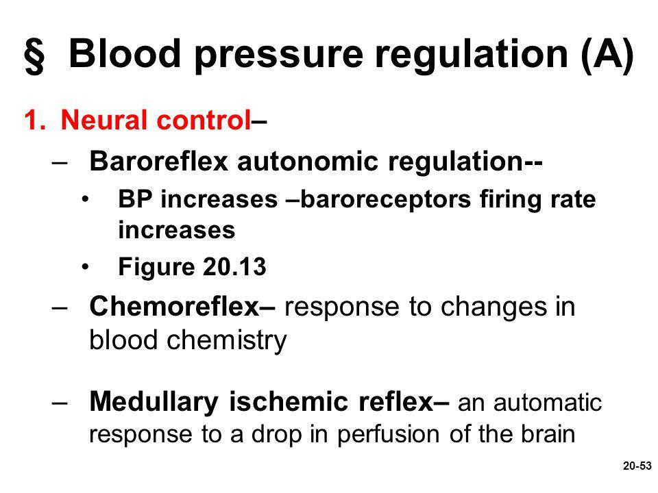20-53 § Blood pressure regulation (A) 1.Neural control– –Baroreflex autonomic regulation-- BP increases –baroreceptors firing rate increases Figure 20