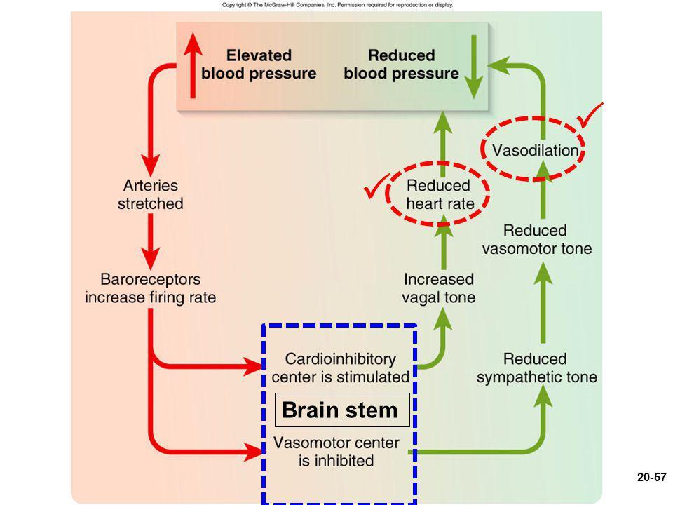 Figure 20.13 Brain stem 20-57  
