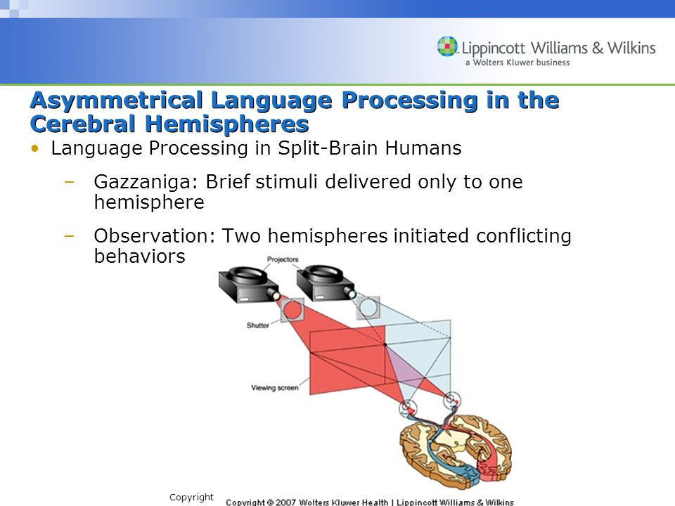 Copyright © 2007 Wolters Kluwer Health | Lippincott Williams & Wilkins Language Processing in Split-Brain Humans –Gazzaniga: Brief stimuli delivered only to one hemisphere –Observation: Two hemispheres initiated conflicting behaviors Asymmetrical Language Processing in the Cerebral Hemispheres