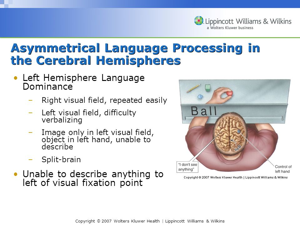 Copyright © 2007 Wolters Kluwer Health | Lippincott Williams & Wilkins Left Hemisphere Language Dominance –Right visual field, repeated easily –Left visual field, difficulty verbalizing –Image only in left visual field, object in left hand, unable to describe –Split-brain Unable to describe anything to left of visual fixation point Asymmetrical Language Processing in the Cerebral Hemispheres