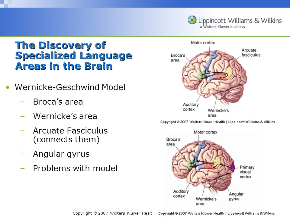 Copyright © 2007 Wolters Kluwer Health | Lippincott Williams & Wilkins Wernicke-Geschwind Model –Broca's area –Wernicke's area –Arcuate Fasciculus (connects them) –Angular gyrus –Problems with model The Discovery of Specialized Language Areas in the Brain