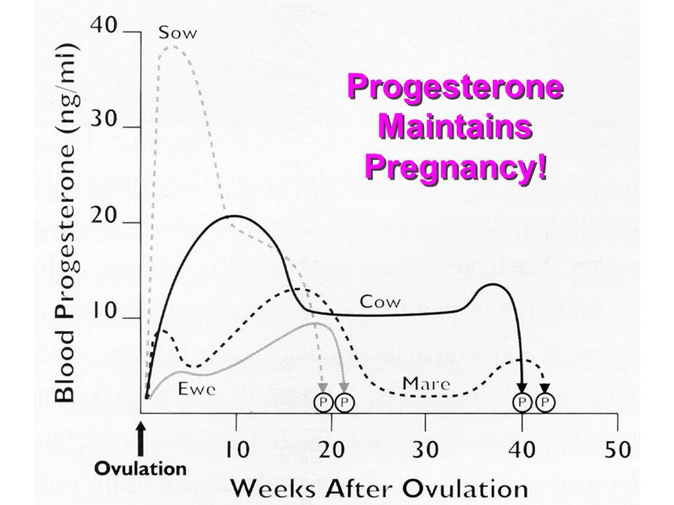 Progesterone Maintains Pregnancy!