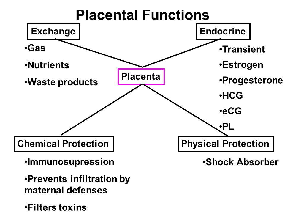 Factors Influencing Fetal Growth Environment Mother Nutrition Size, Parity Placenta Blood flow Size Environment Mother Nutrition Size, Parity Placenta Blood flow Size