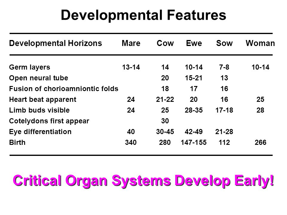 Developmental HorizonsMareCowEweSowWoman Germ layers13-141410-147-810-14 Open neural tube2015-2113 Fusion of chorioamniontic folds181716 Heart beat apparent2421-22201625 Limb buds visible242528-3517-1828 Cotelydons first appear30 Eye differentiation4030-4542-4921-28 Birth340280147-155112266 Developmental Features Critical Organ Systems Develop Early!