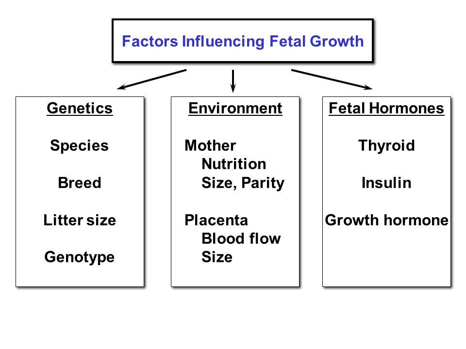 Factors Influencing Fetal Growth Genetics Species Breed Litter size Genotype Genetics Species Breed Litter size Genotype