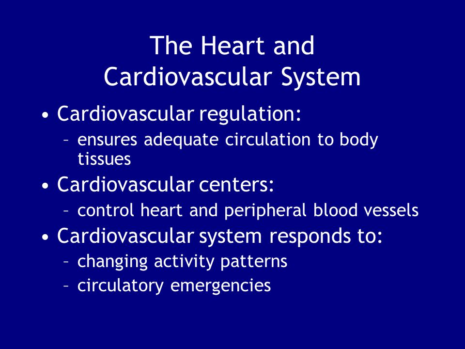 The Heart and Cardiovascular System Cardiovascular regulation: –ensures adequate circulation to body tissues Cardiovascular centers: –control heart and peripheral blood vessels Cardiovascular system responds to: –changing activity patterns –circulatory emergencies