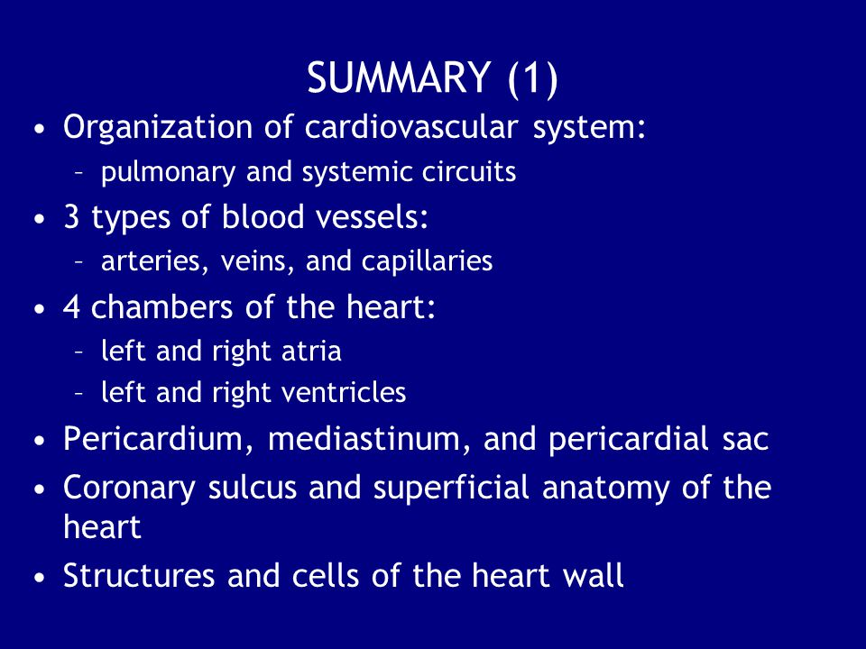 SUMMARY (1) Organization of cardiovascular system: –pulmonary and systemic circuits 3 types of blood vessels: –arteries, veins, and capillaries 4 chambers of the heart: –left and right atria –left and right ventricles Pericardium, mediastinum, and pericardial sac Coronary sulcus and superficial anatomy of the heart Structures and cells of the heart wall