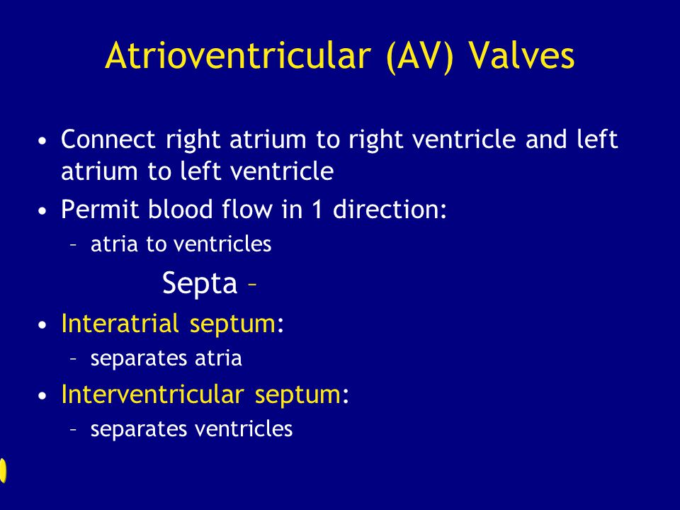 Atrioventricular (AV) Valves Connect right atrium to right ventricle and left atrium to left ventricle Permit blood flow in 1 direction: –atria to ven