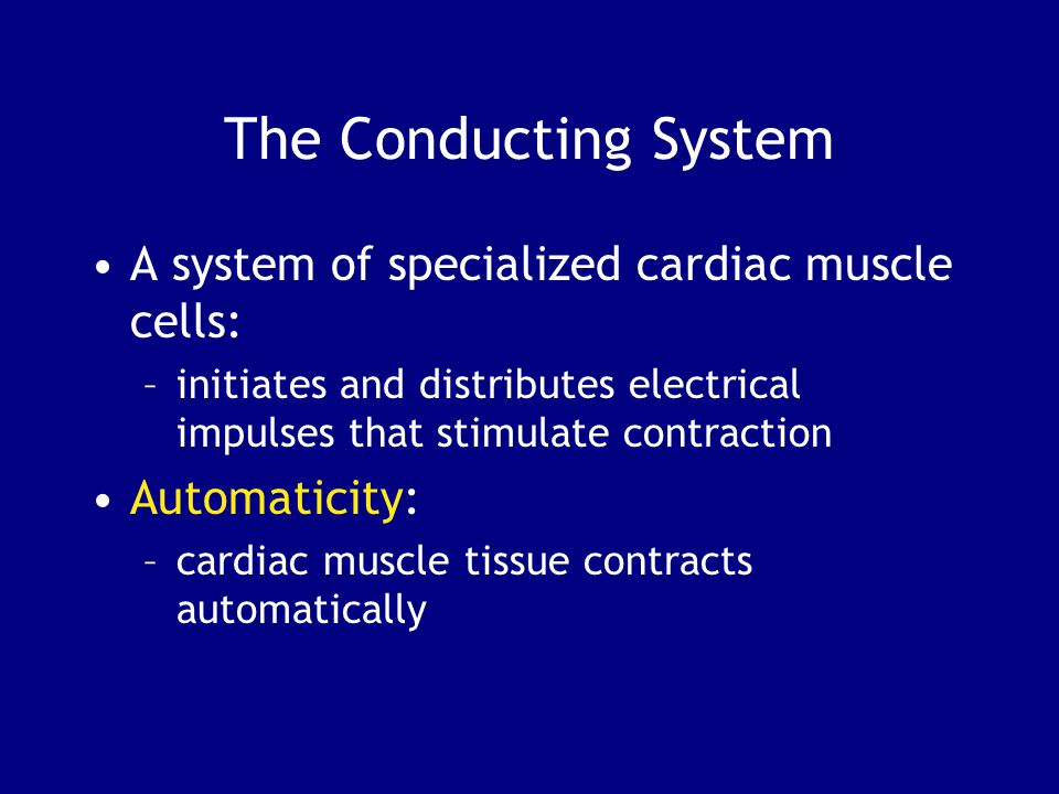 A system of specialized cardiac muscle cells: –initiates and distributes electrical impulses that stimulate contraction Automaticity: –cardiac muscle tissue contracts automatically