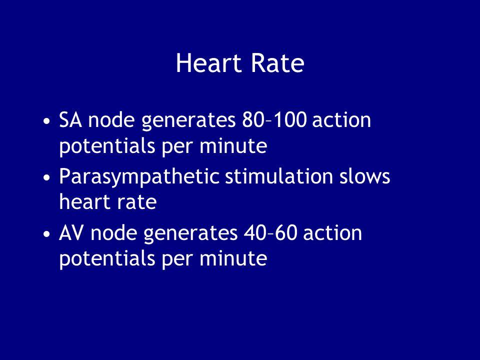 Heart Rate SA node generates 80–100 action potentials per minute Parasympathetic stimulation slows heart rate AV node generates 40–60 action potential