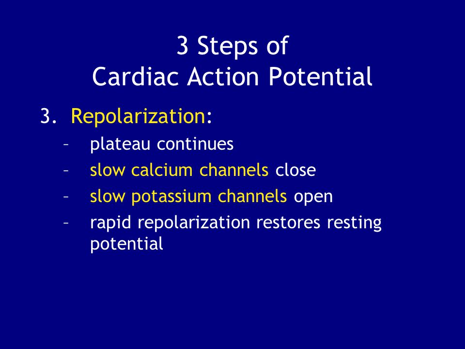 3 Steps of Cardiac Action Potential 3.Repolarization: –plateau continues –slow calcium channels close –slow potassium channels open –rapid repolarization restores resting potential