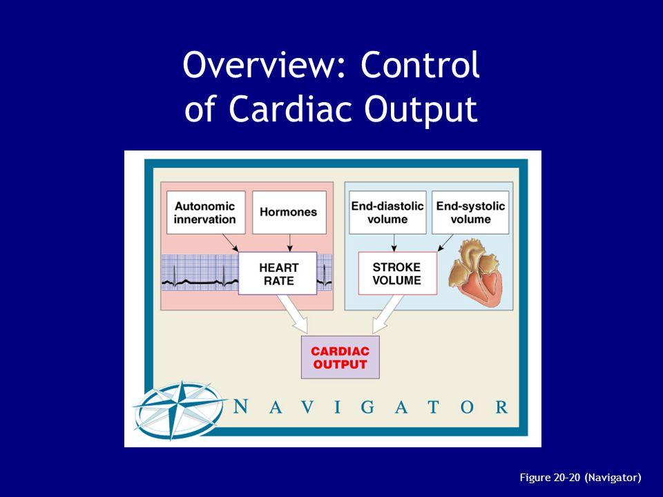 Overview: Control of Cardiac Output Figure 20–20 (Navigator)