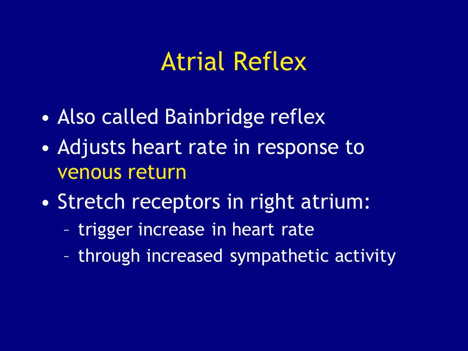 Atrial Reflex Also called Bainbridge reflex Adjusts heart rate in response to venous return Stretch receptors in right atrium: –trigger increase in heart rate –through increased sympathetic activity