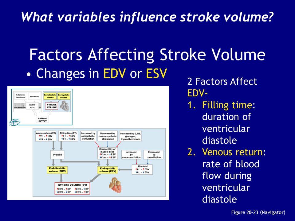 Factors Affecting Stroke Volume Changes in EDV or ESV Figure 20–23 (Navigator) 2 Factors Affect EDV- 1. Filling time: duration of ventricular diastole