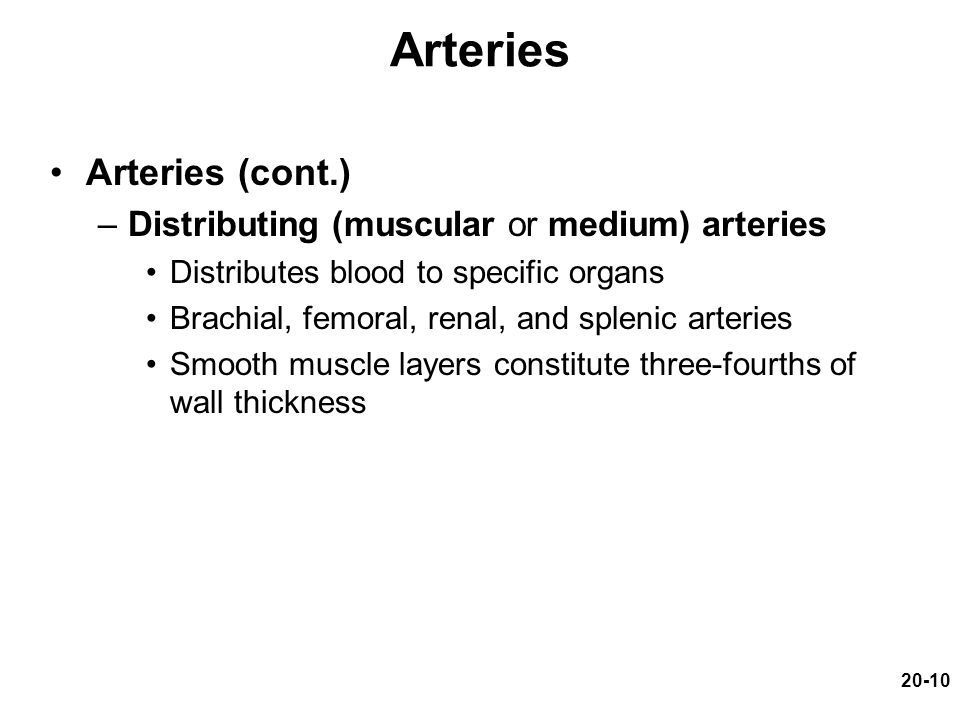 20-10 Arteries Arteries (cont.) –Distributing (muscular or medium) arteries Distributes blood to specific organs Brachial, femoral, renal, and splenic