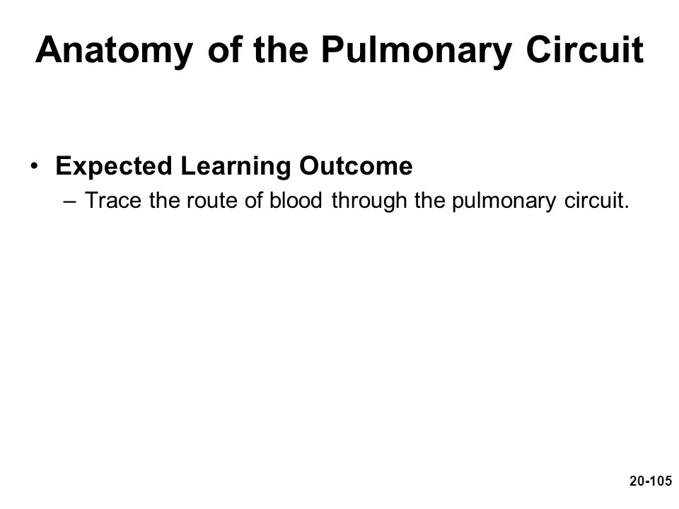 Anatomy of the Pulmonary Circuit Expected Learning Outcome –Trace the route of blood through the pulmonary circuit. 20-105