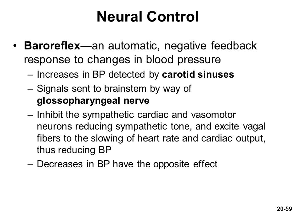 20-59 Neural Control Baroreflex—an automatic, negative feedback response to changes in blood pressure –Increases in BP detected by carotid sinuses –Si