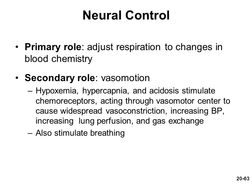 20-63 Neural Control Primary role: adjust respiration to changes in blood chemistry Secondary role: vasomotion –Hypoxemia, hypercapnia, and acidosis s