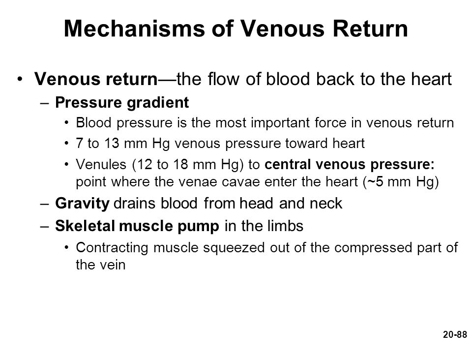 20-88 Mechanisms of Venous Return Venous return—the flow of blood back to the heart –Pressure gradient Blood pressure is the most important force in v