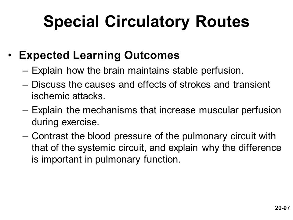 Special Circulatory Routes Expected Learning Outcomes –Explain how the brain maintains stable perfusion. –Discuss the causes and effects of strokes an