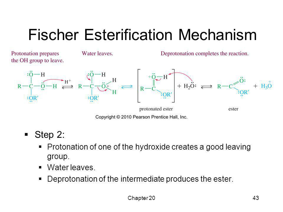 Chapter 2043 Fischer Esterification Mechanism  Step 2:  Protonation of one of the hydroxide creates a good leaving group.  Water leaves.  Deproton