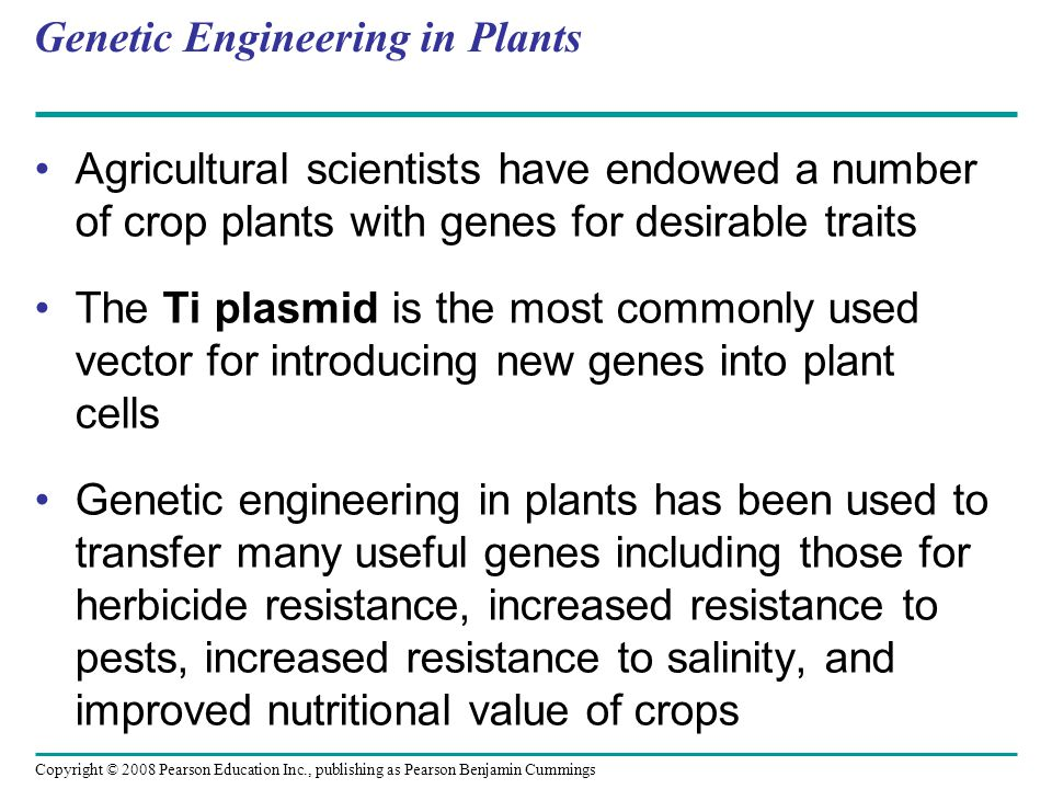 Copyright © 2008 Pearson Education Inc., publishing as Pearson Benjamin Cummings Genetic Engineering in Plants Agricultural scientists have endowed a