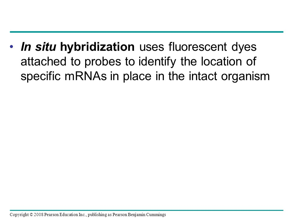 Copyright © 2008 Pearson Education Inc., publishing as Pearson Benjamin Cummings In situ hybridization uses fluorescent dyes attached to probes to ide