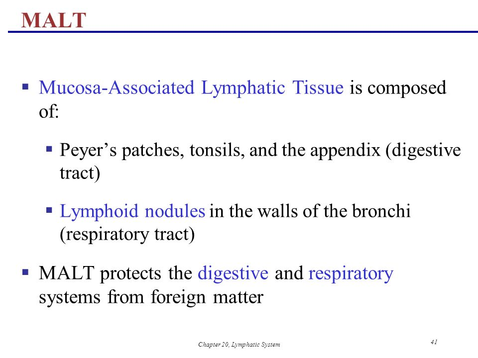 Chapter 20, Lymphatic System 41 MALT  Mucosa-Associated Lymphatic Tissue is composed of:  Peyer's patches, tonsils, and the appendix (digestive trac