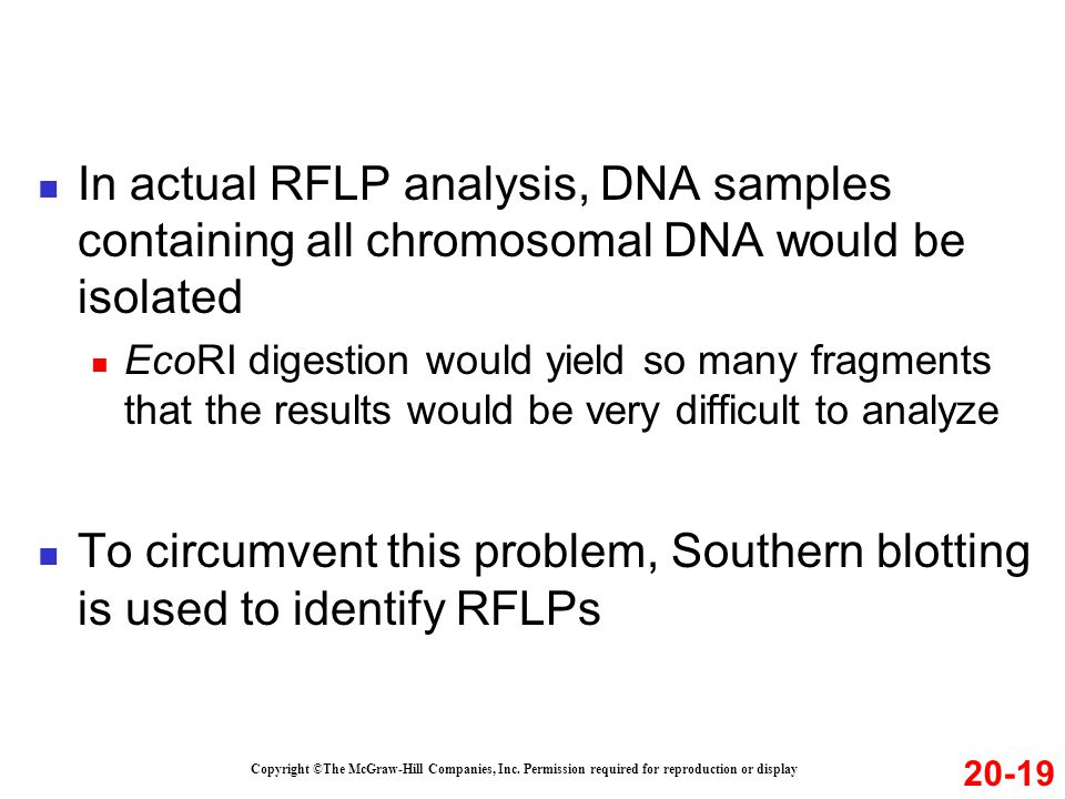 In actual RFLP analysis, DNA samples containing all chromosomal DNA would be isolated EcoRI digestion would yield so many fragments that the results would be very difficult to analyze To circumvent this problem, Southern blotting is used to identify RFLPs Copyright ©The McGraw-Hill Companies, Inc.