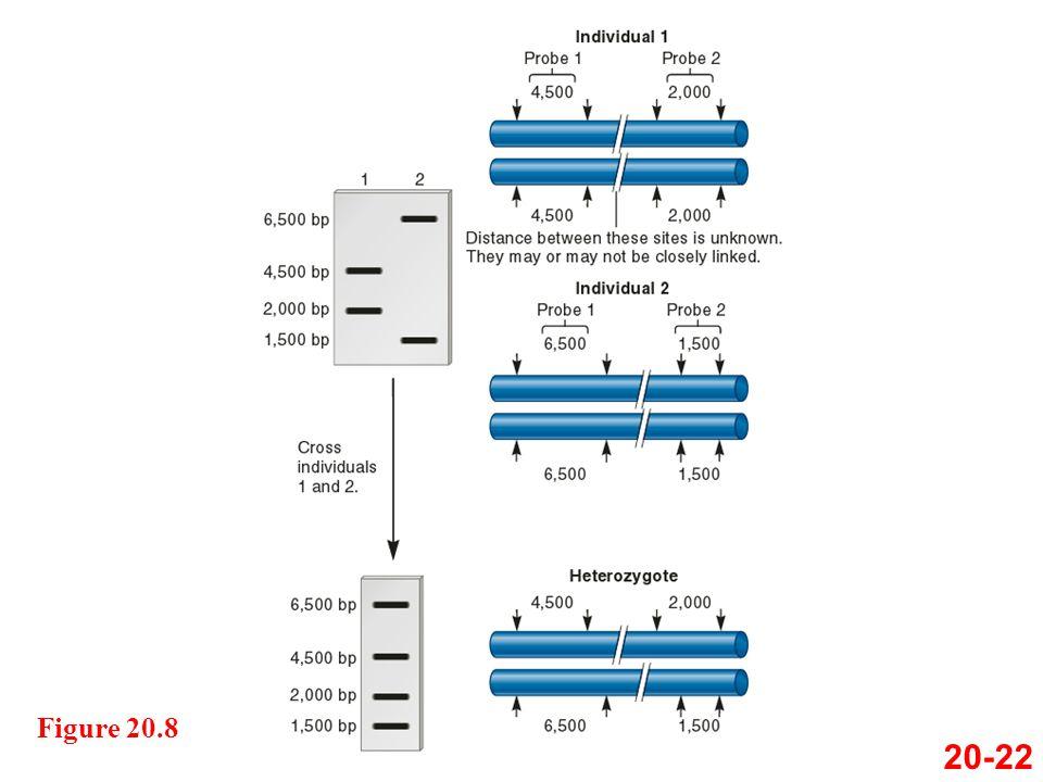 Figure 20.8 20-22