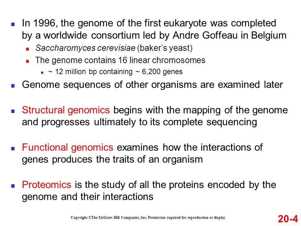 In 1996, the genome of the first eukaryote was completed by a worldwide consortium led by Andre Goffeau in Belgium Saccharomyces cerevisiae (baker's yeast) The genome contains 16 linear chromosomes ~ 12 million bp containing ~ 6,200 genes Genome sequences of other organisms are examined later Structural genomics begins with the mapping of the genome and progresses ultimately to its complete sequencing Functional genomics examines how the interactions of genes produces the traits of an organism Proteomics is the study of all the proteins encoded by the genome and their interactions Copyright ©The McGraw-Hill Companies, Inc.