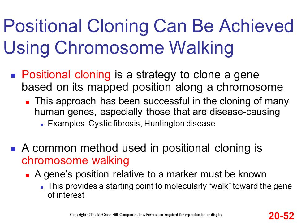 Positional cloning is a strategy to clone a gene based on its mapped position along a chromosome This approach has been successful in the cloning of many human genes, especially those that are disease-causing Examples: Cystic fibrosis, Huntington disease A common method used in positional cloning is chromosome walking A gene's position relative to a marker must be known This provides a starting point to molecularly walk toward the gene of interest Copyright ©The McGraw-Hill Companies, Inc.