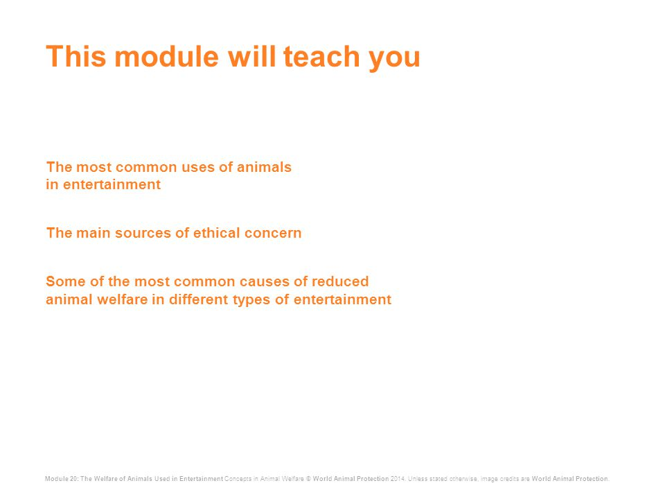 Module 20: The Welfare of Animals Used in Entertainment Concepts in Animal Welfare © World Animal Protection 2014.
