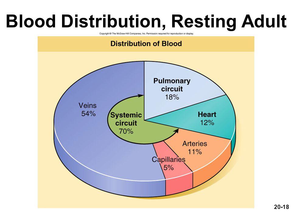 20-18 Blood Distribution, Resting Adult