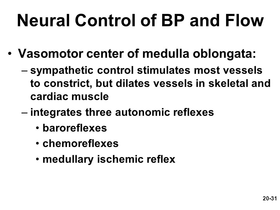 20-31 Neural Control of BP and Flow Vasomotor center of medulla oblongata: –sympathetic control stimulates most vessels to constrict, but dilates vess
