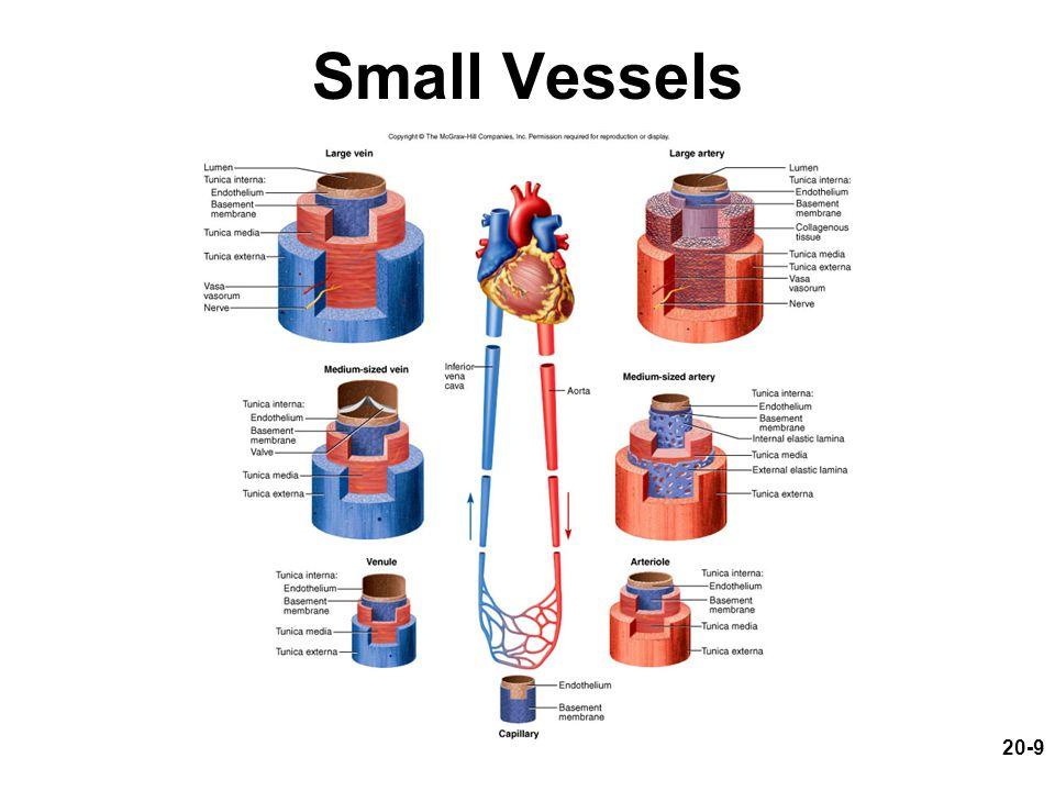 20-9 Small Vessels